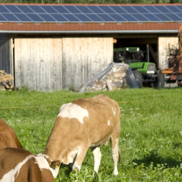 Aurinkopaneelit maatilalle